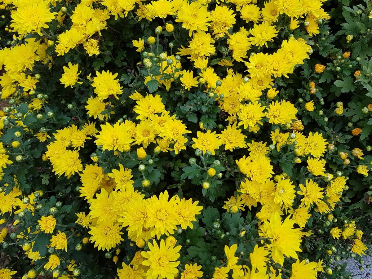 Fiori Gialli Piccoli.Immagini Belle Prato Erba Autunno Flora Fiore Giallo Fiore
