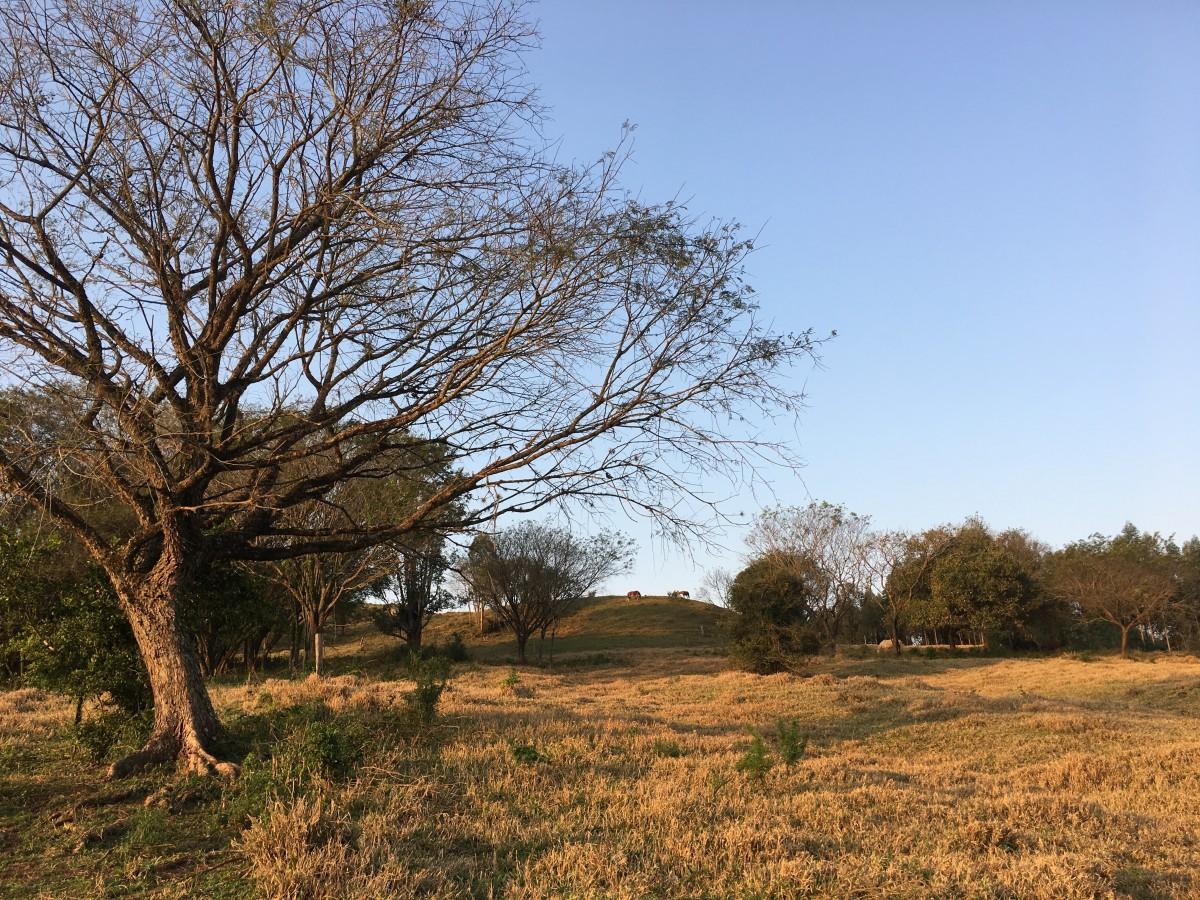 Llanura Fotos gratis : paisaje...