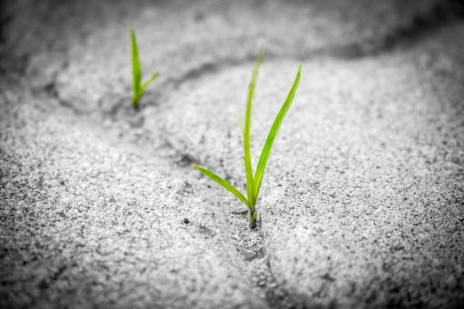 木,自然,草,ハンド,屋外,黒と白