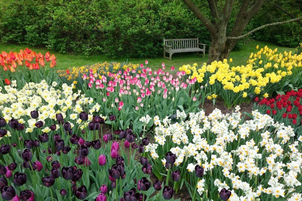 Весенние ранние цветы в саду фото и