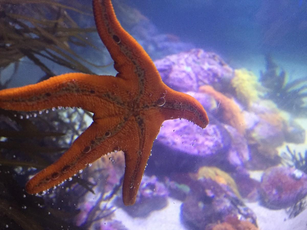 How to maintain a freshwater aquarium