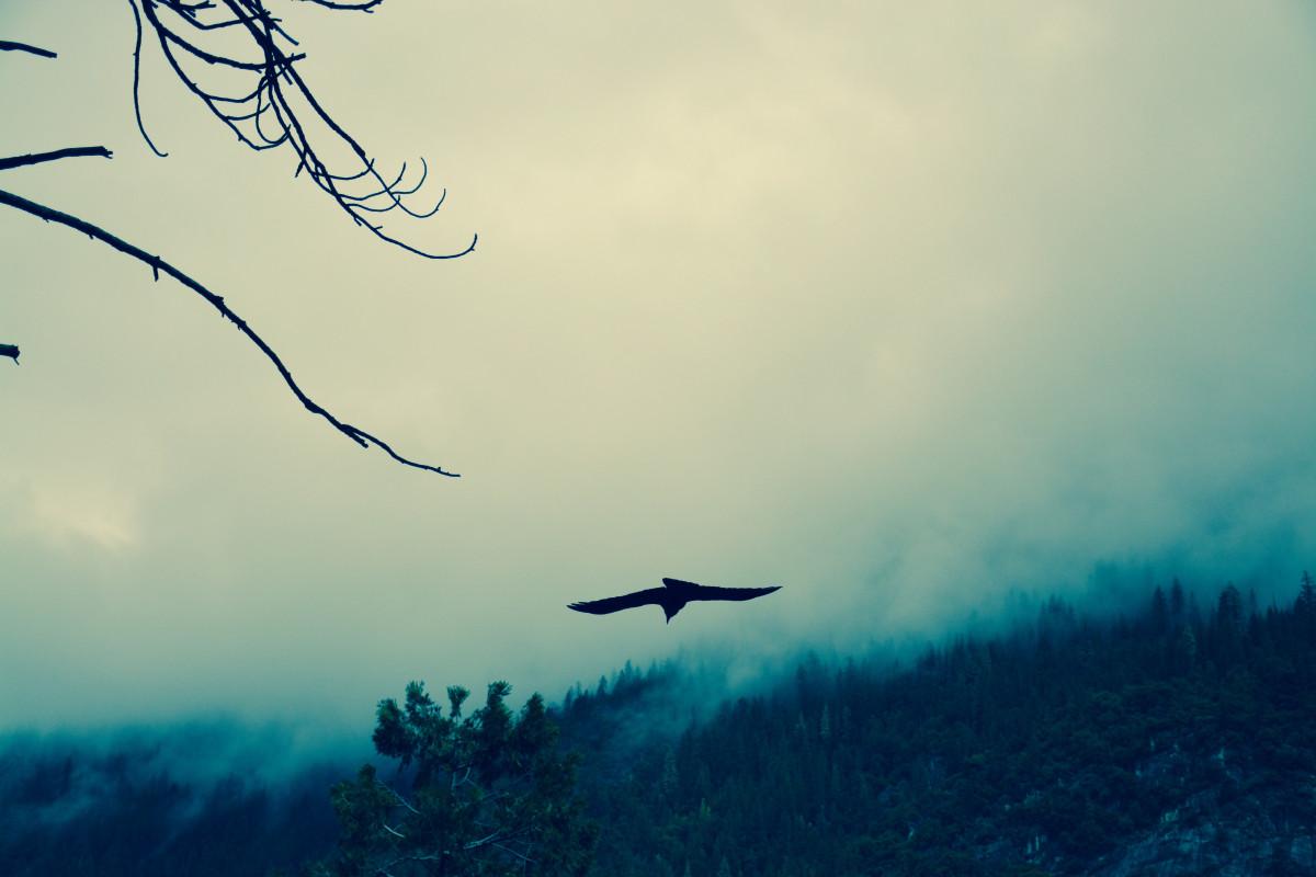 Αποτέλεσμα εικόνας για raven atmospheric