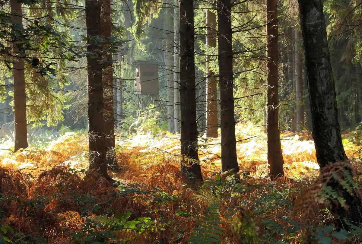 картинки с лиственным лесом поляне тля