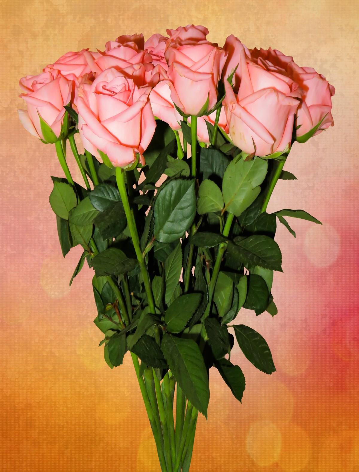 Images gratuites bouquet d 39 anniversaire anniversaire for Bouquet de fleurs 7 lettres