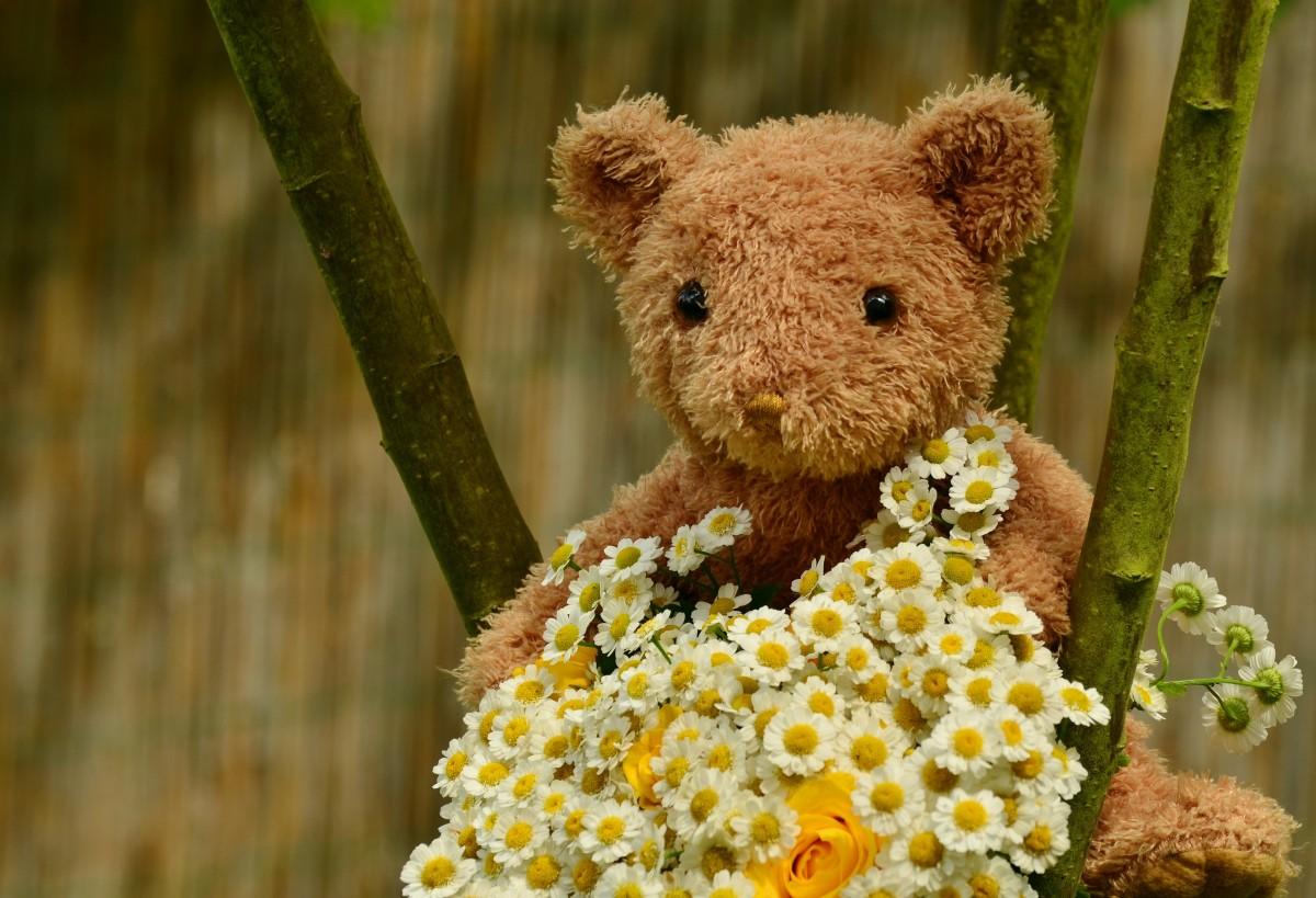 красивые цветы фото со смыслом