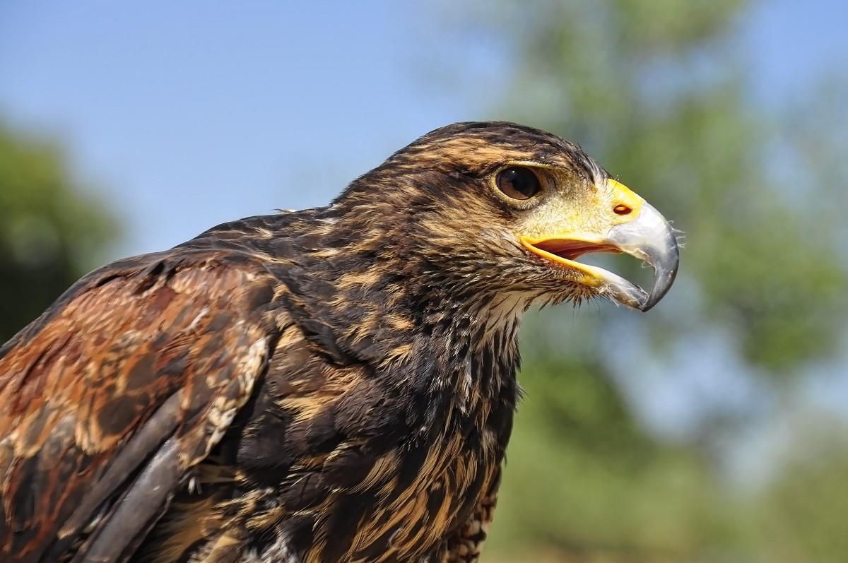 free images wing animal wildlife wild portrait beak