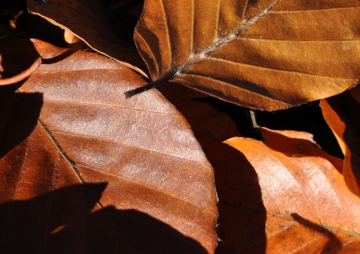 自然褐色_無料画像 : 自然, ブランチ, 工場, 木材, 花, 褐色, シーズン ...