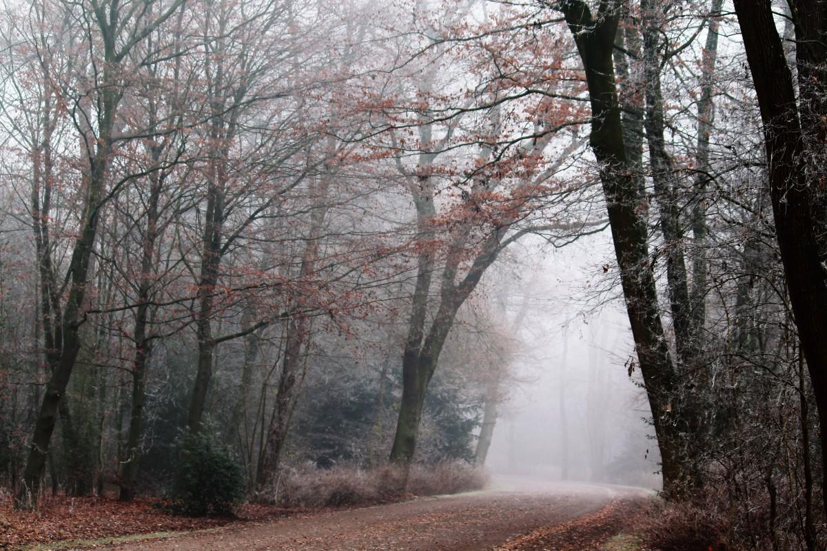 landskap träd natur skog utomhus- gren snö kall vinter- växt dimma dimma vandring solljus morgon- blad blomma Frost gå naturskön höst parkera väder resten säsong träd framträda estetisk löv mystisk promenad skog livsmiljö humör idyll bort naturstig faller färg falla lövverk höstlandskap höstskog nedgången lämnar höstfärger Morgenstimmung skogsväg kahl höstdag skogsstig naturlig miljö atmosfär fenomen träig växt