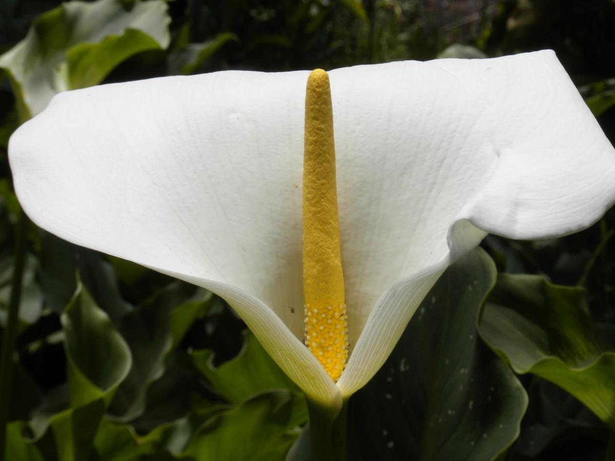 Цветок цветущий листочком белым