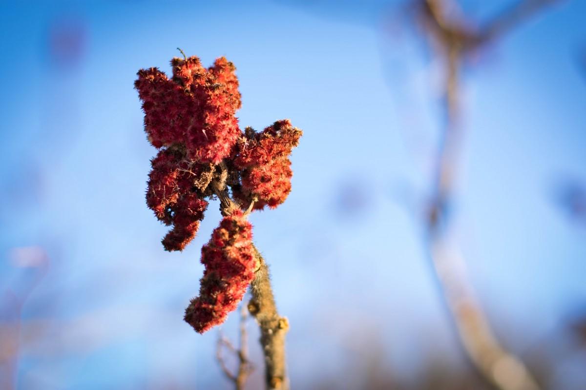 Kostenlose foto : Baum, Natur, Ast, blühen, kalt, Winter, Pflanze ...