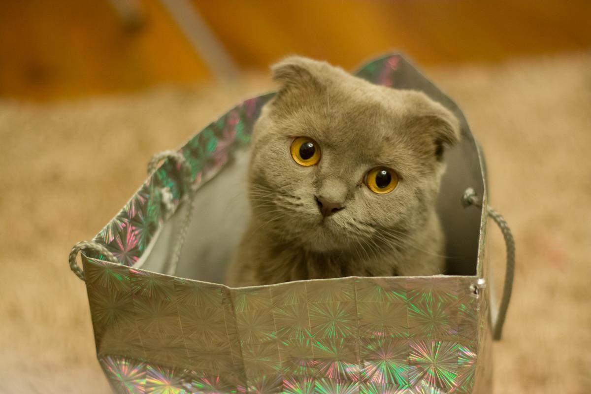 почему коты так любят коробки необходимо
