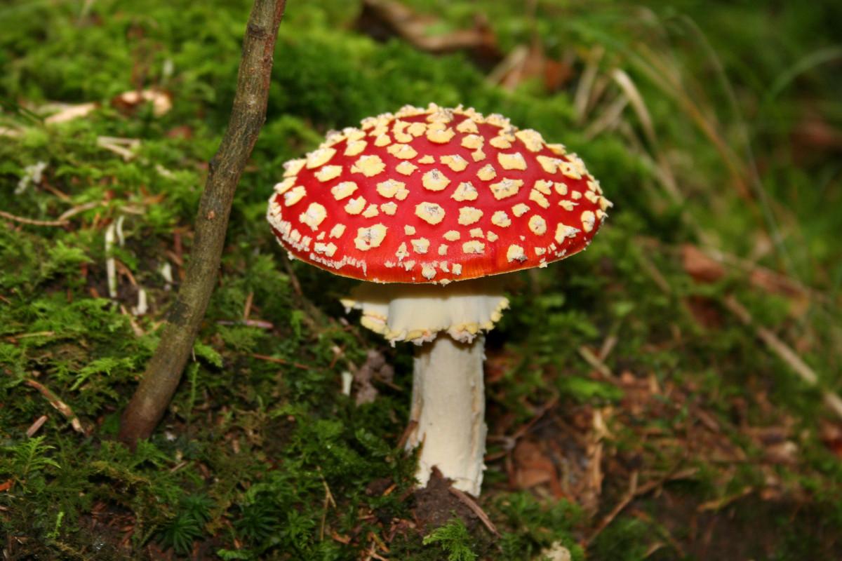 Мухоморы грибы фото для детей