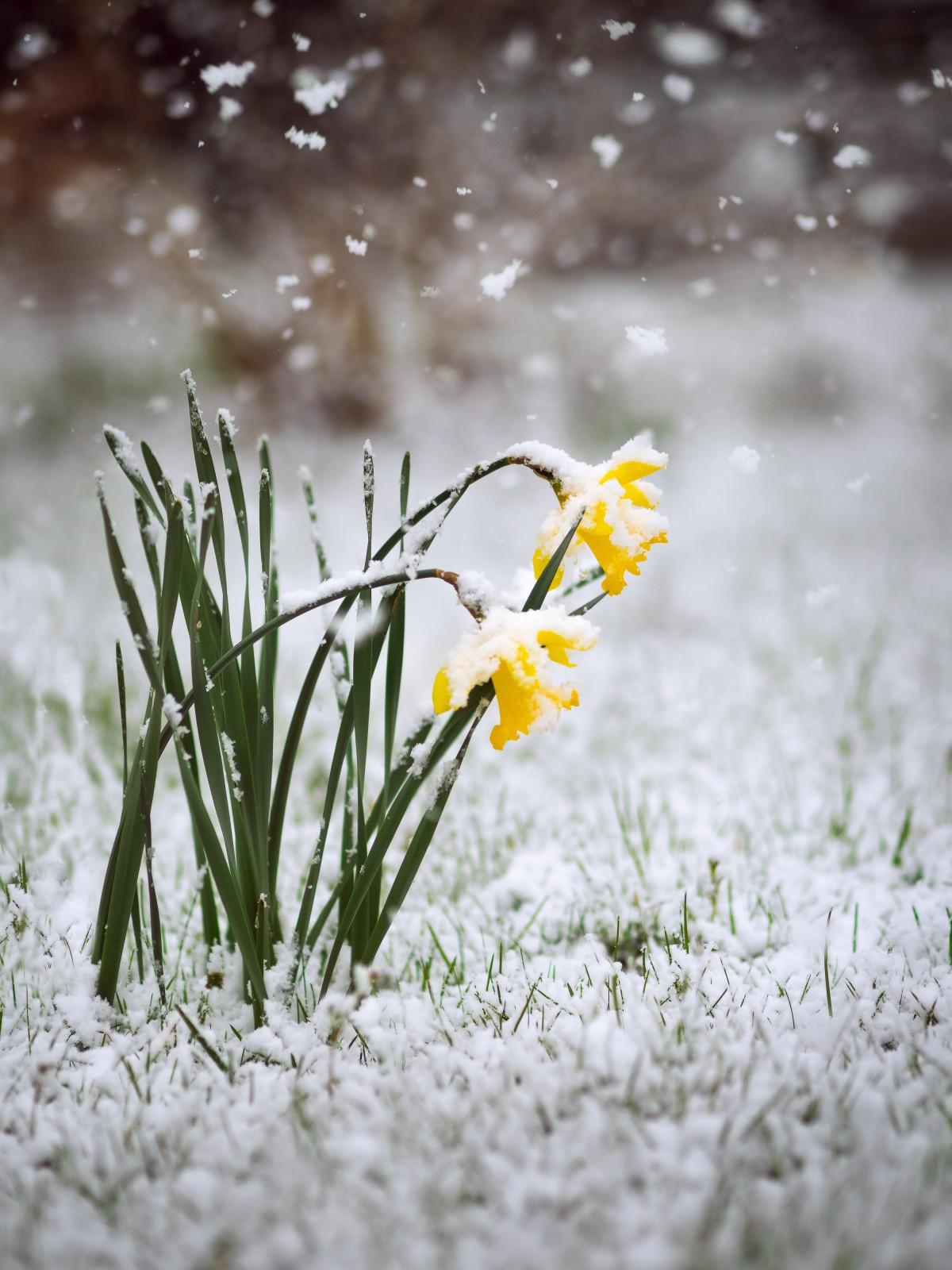 этом открытка снег весной для срезки