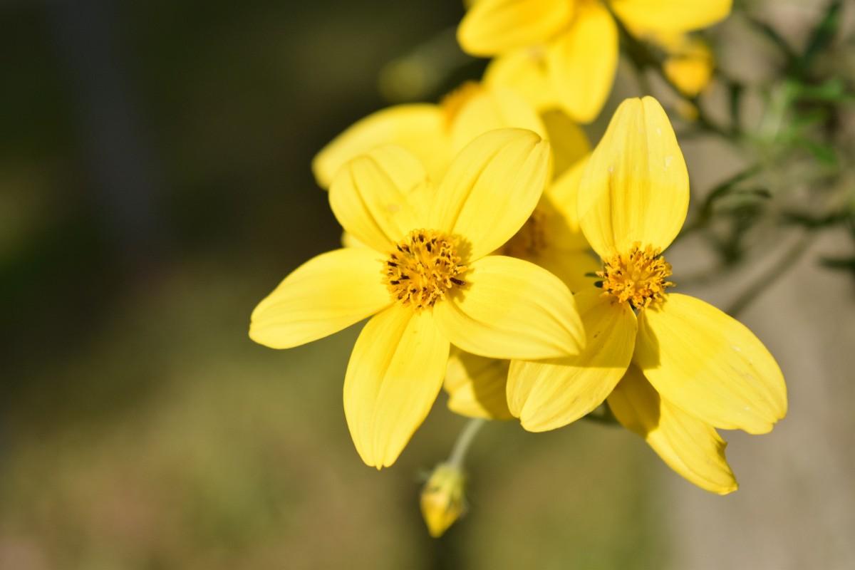 Free Images Blossom Sunlight Leaf Petal Summer Pollen Autumn
