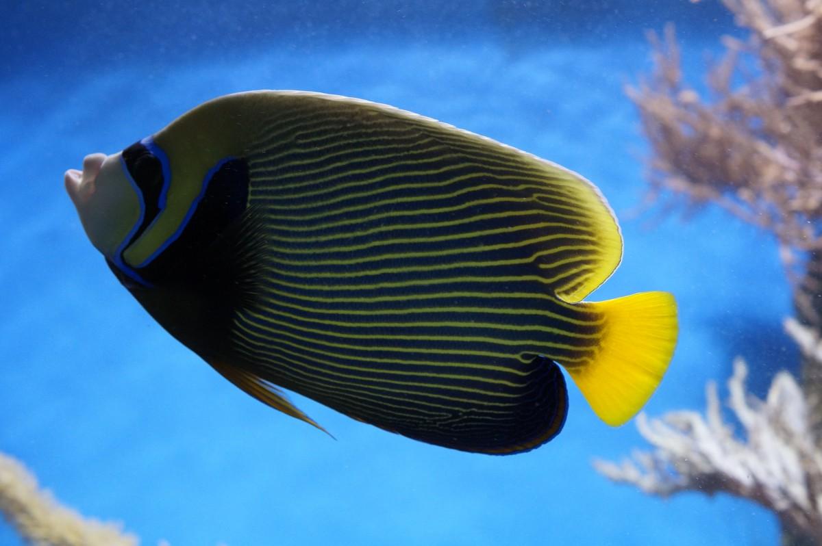 free images ocean wildlife swim pattern color close fauna