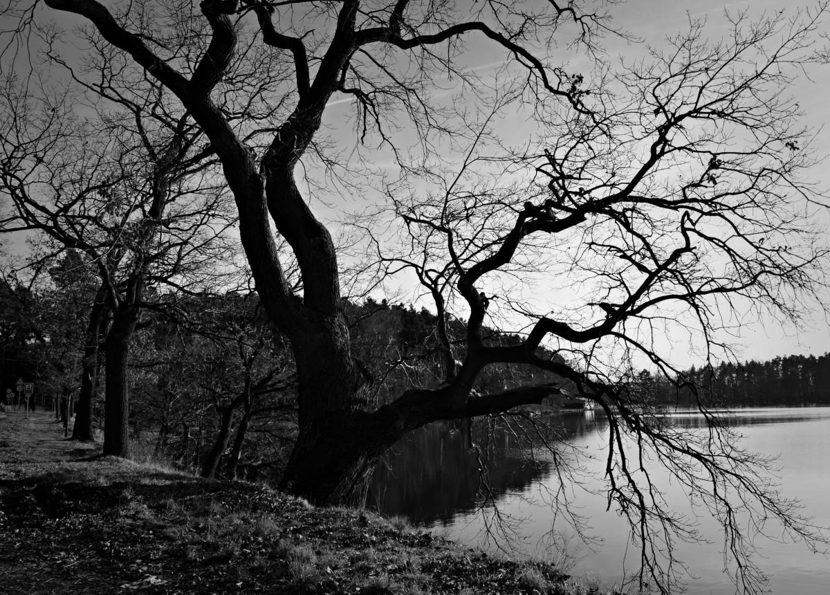 Images gratuites paysage arbre la nature for t for Disegni bianco e nero paesaggi