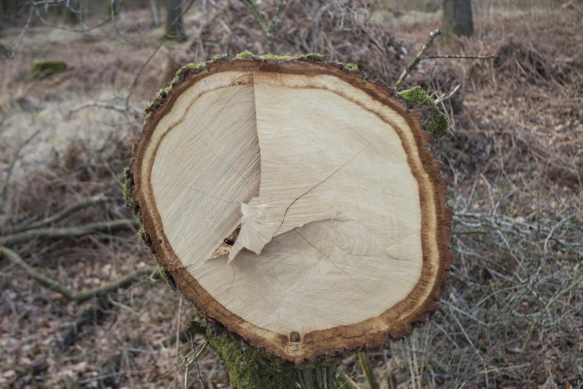Images gratuites arbre for t structure plante bois feuille fleur tronc sol botanique - Arbre fruitier comme bois de chauffage ...