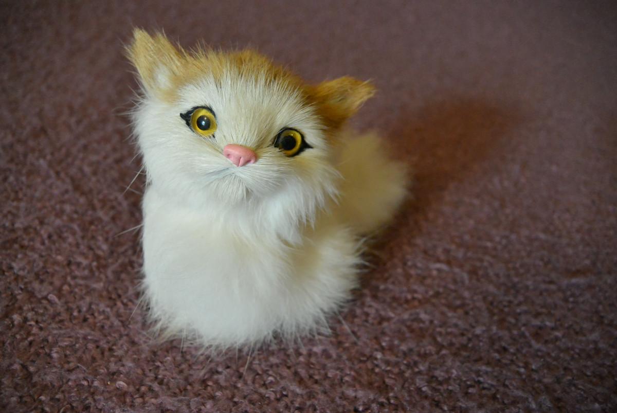 pekná mladá chlpaté mačička veľký Latina orgie