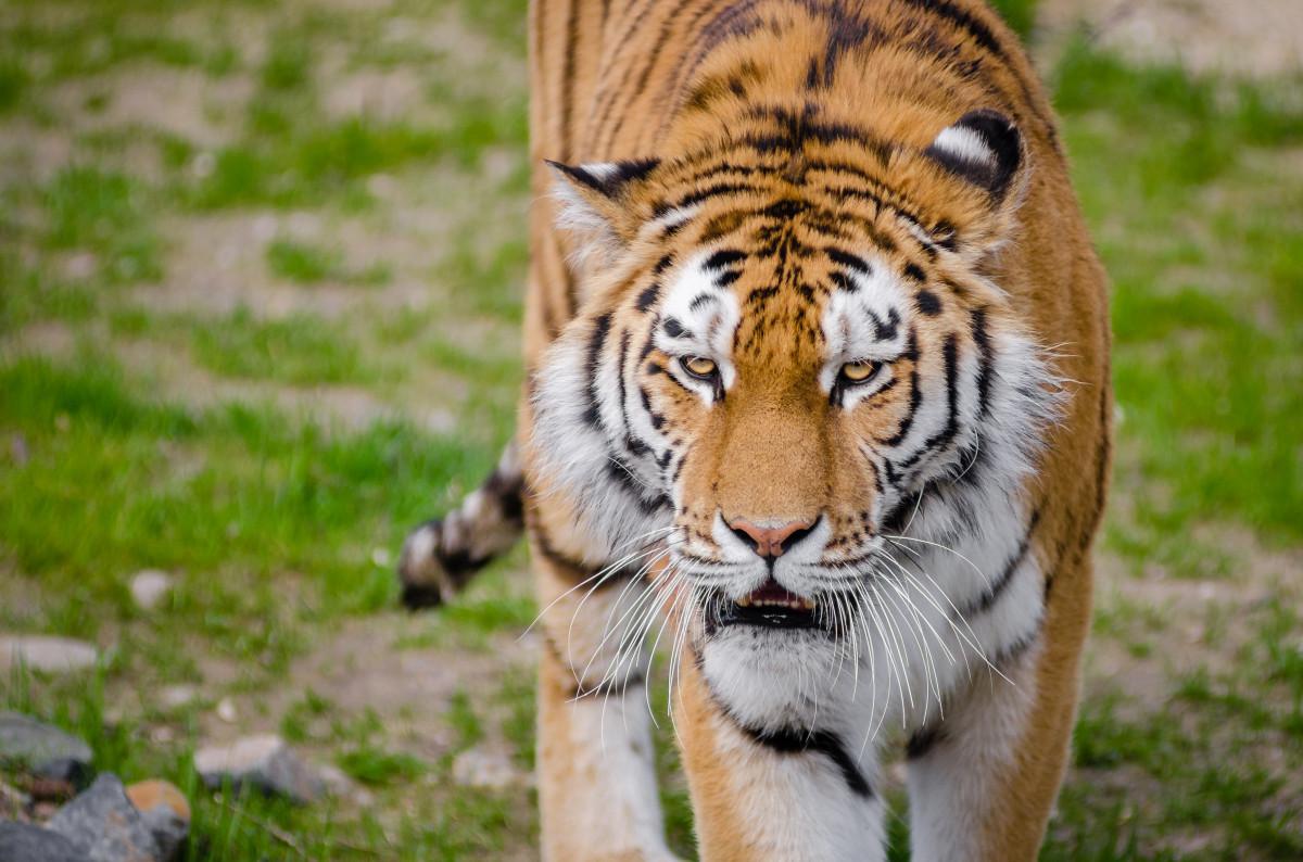 Images gratuites animal des loisirs faune zoo gros - Images d animaux sauvages gratuites ...