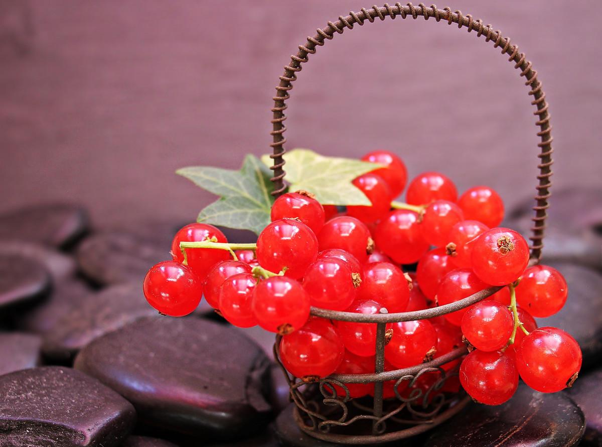 картинки малина и красная смородина температура воды