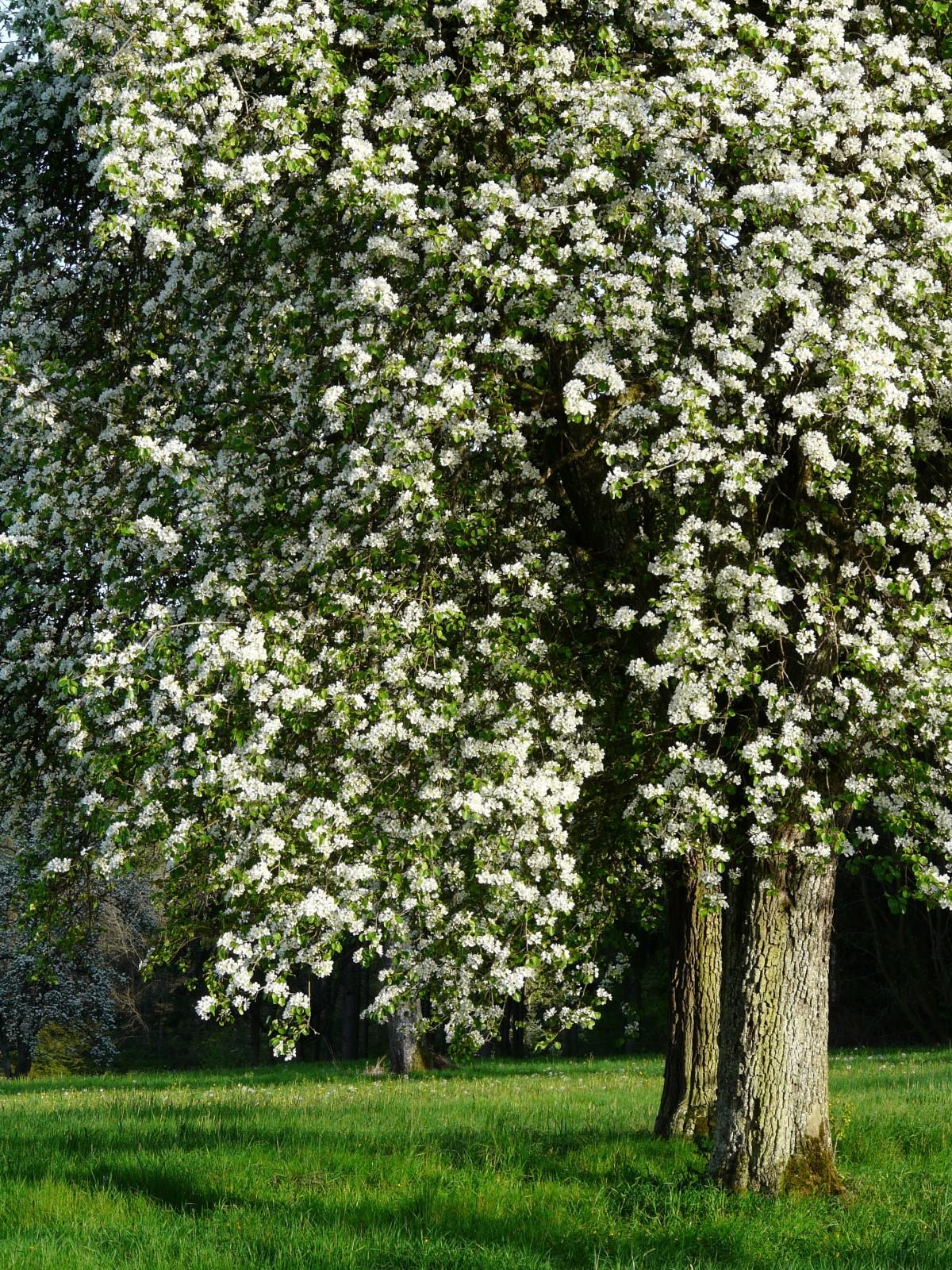 Белые цветы кустарники фото