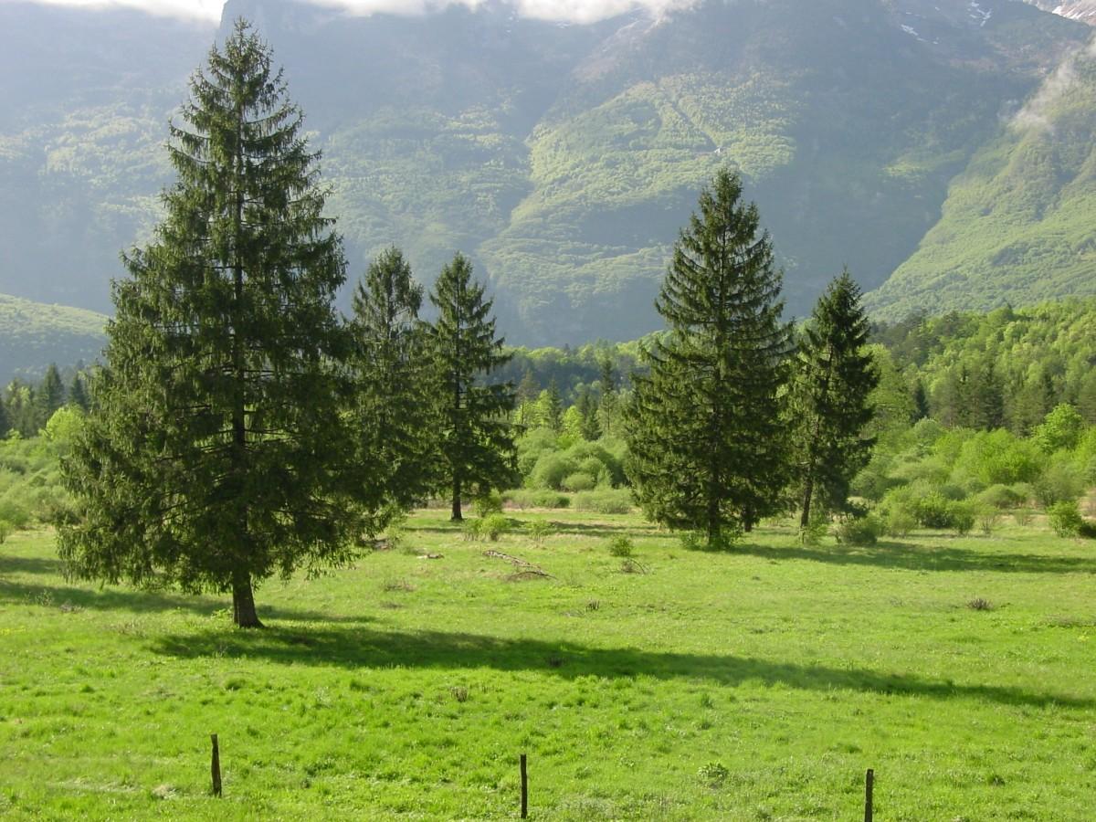 gambar pemandangan pohon gurun gunung bidang padang