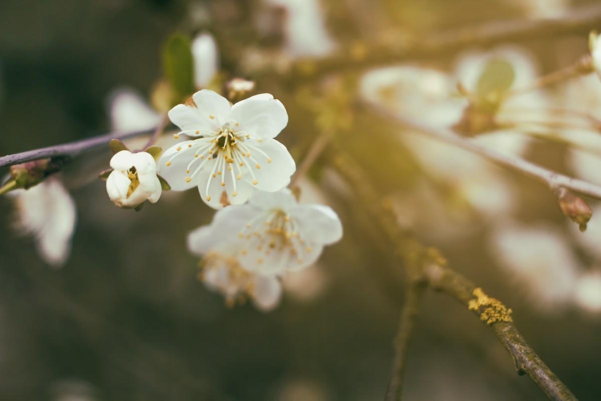 Free Images Tree Branch Flower Bloom Spring Botany