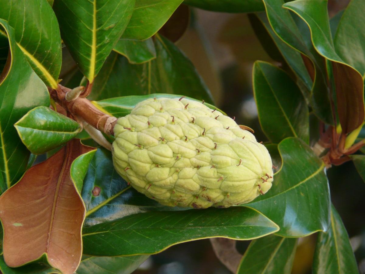 Fotos Gratis Fruta Hoja Flor Comida Produce