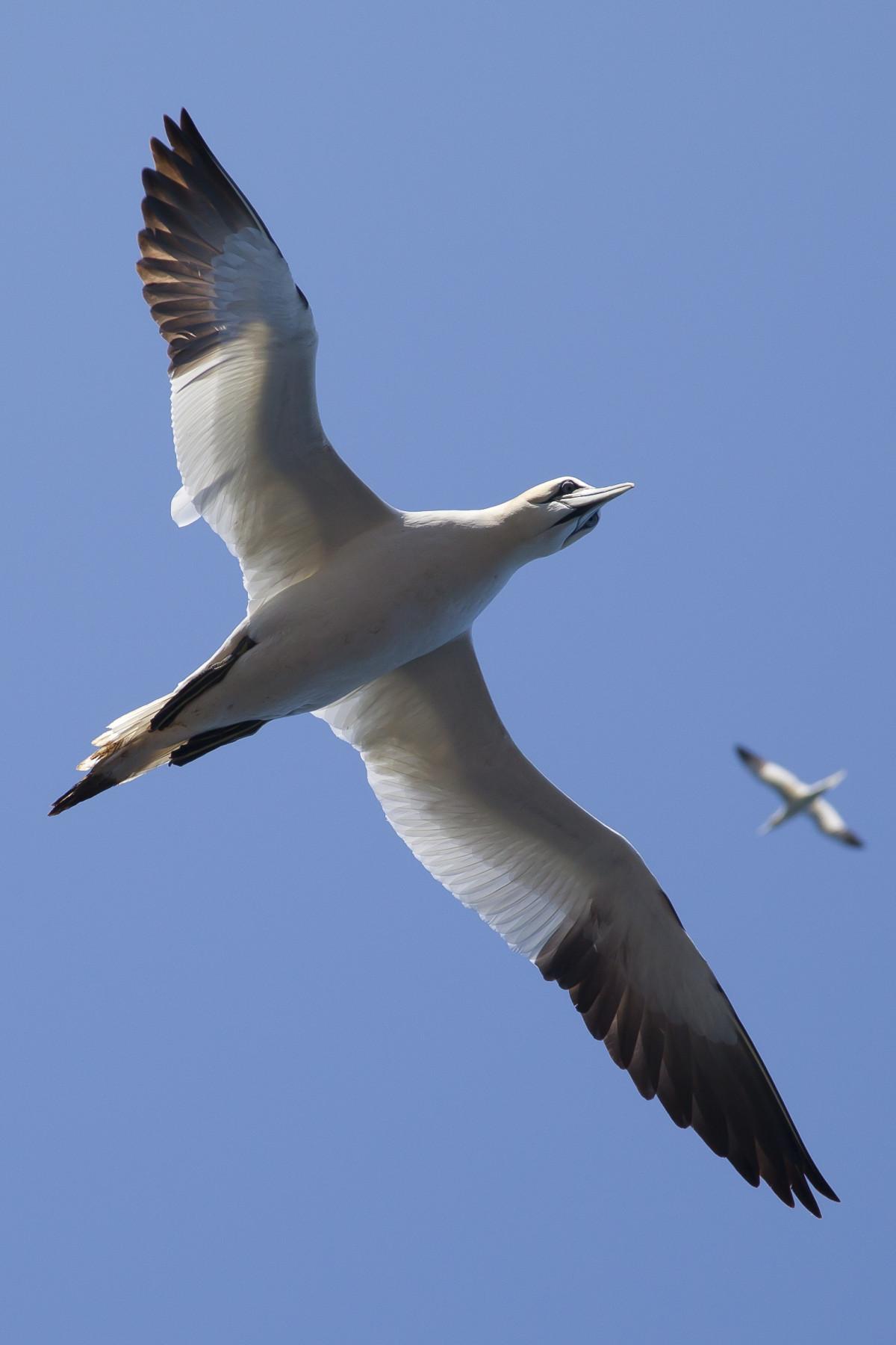 Animals Birds Flight Flying Gulls Seagulls Sky Wings Sule