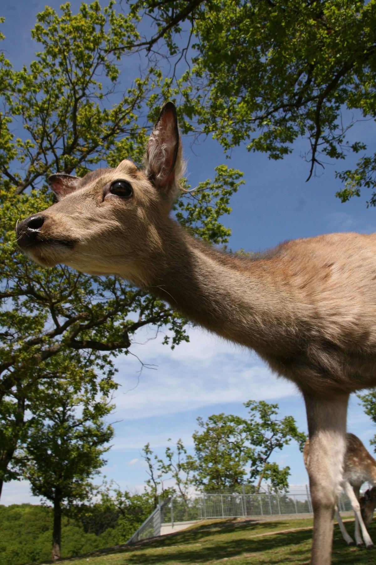 Free wildlife wild zoo mammal close fauna sno