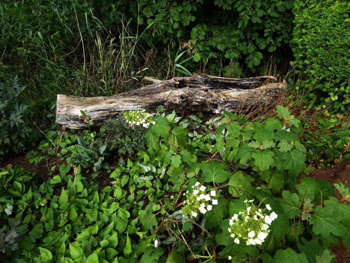 Fotos gratis rbol rock planta flor descuidado for Vegetacion ornamental
