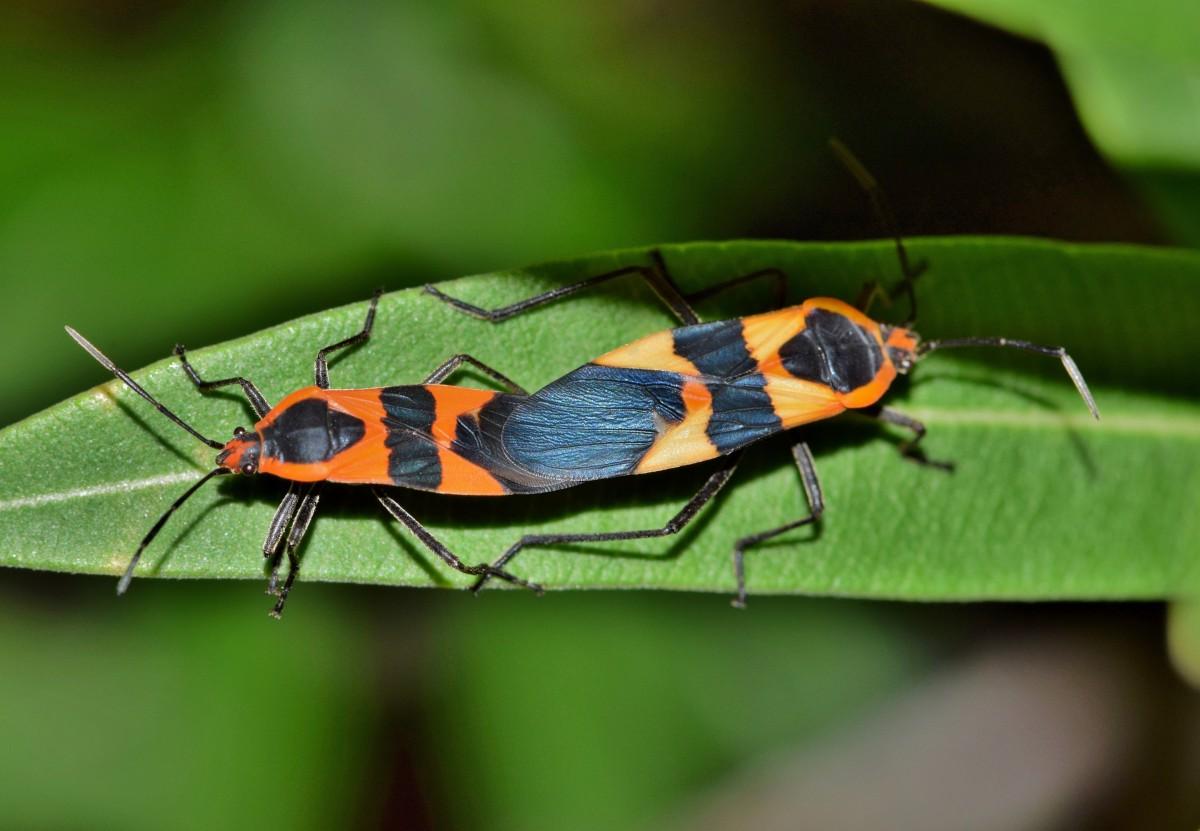 Картинки с насекомыми, как сделать открытку