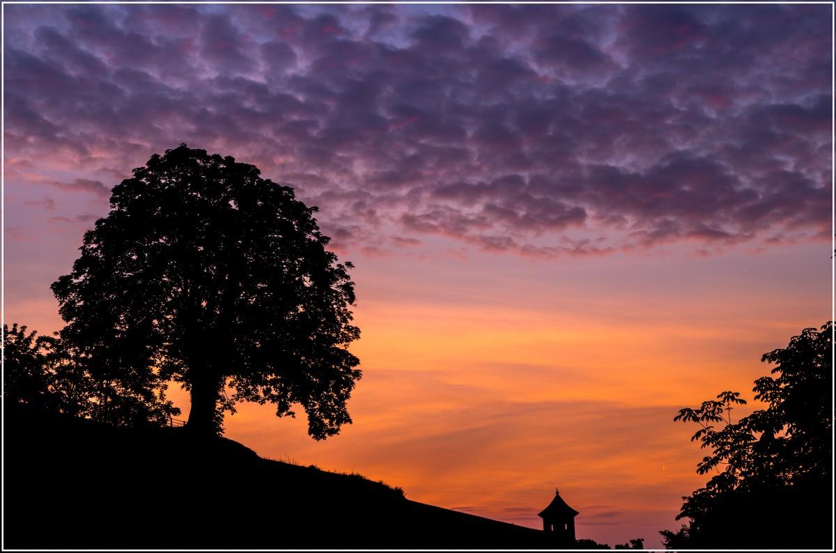 木 地平線 シルエット 雲 空 太陽 日の出 日没 太陽光 朝 夜明け 雰囲気 夕暮れ イブニング 色 ペンタックス バウム k30 エルフート モジェンテ ユーカルトウィマー 残光 朝は赤い空