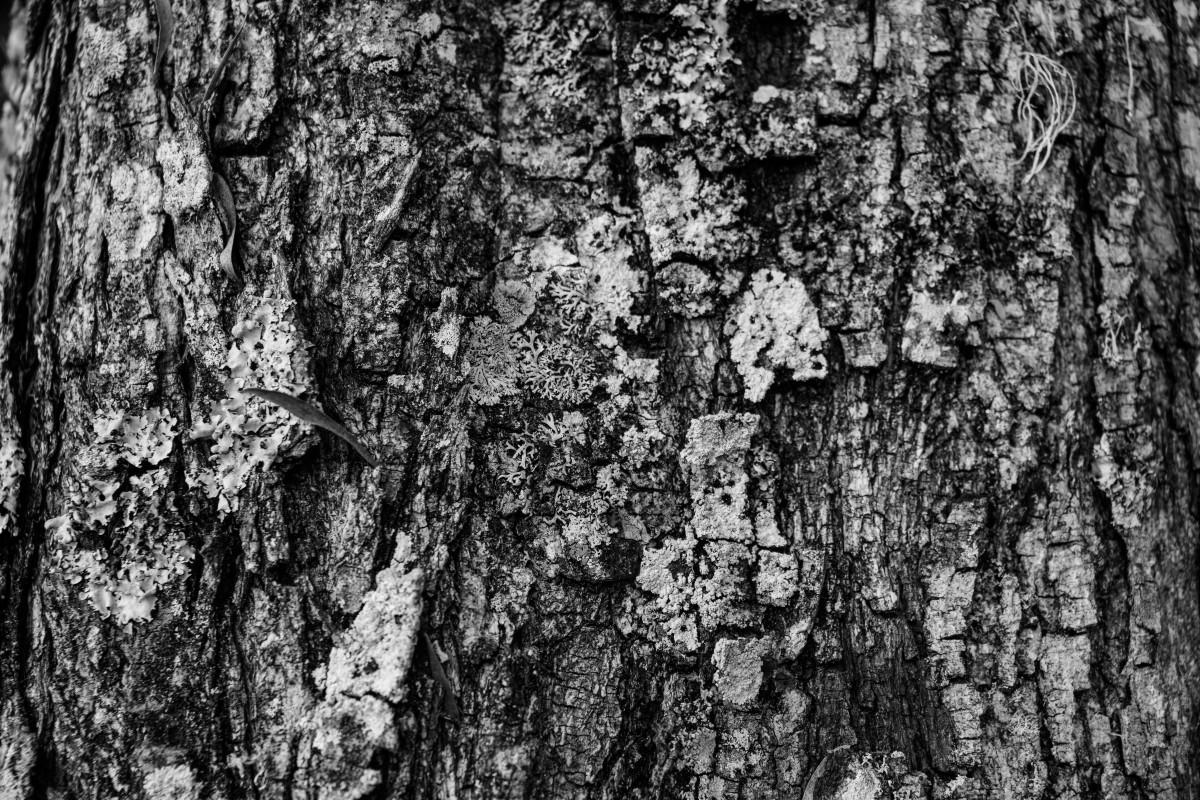 images gratuites arbre branche noir et blanc bois texture int rieur tronc mur sauvage. Black Bedroom Furniture Sets. Home Design Ideas