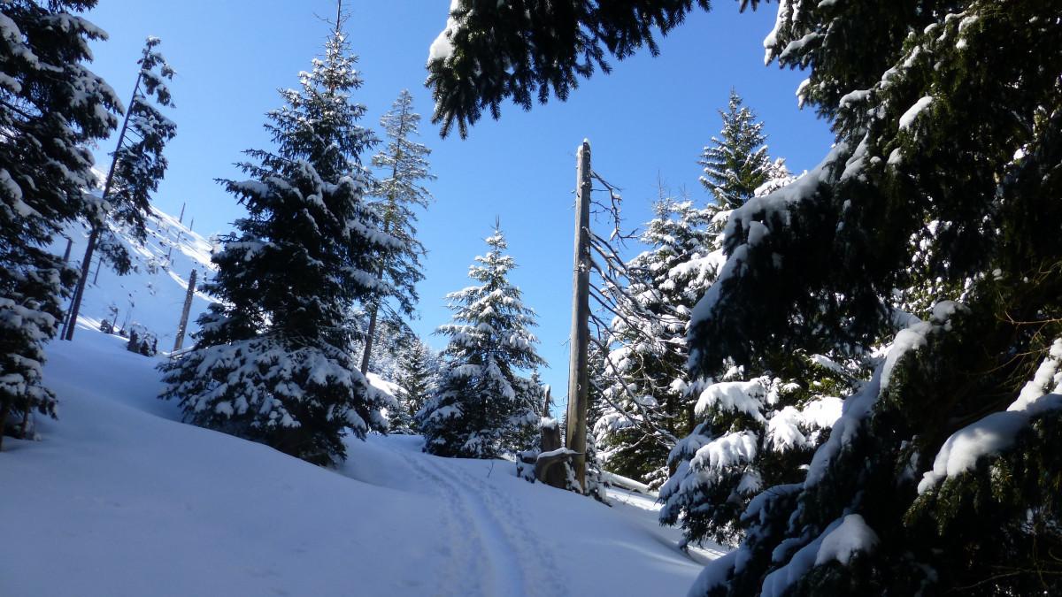Images gratuites arbre for t branche neige hiver for Couverture plante hiver