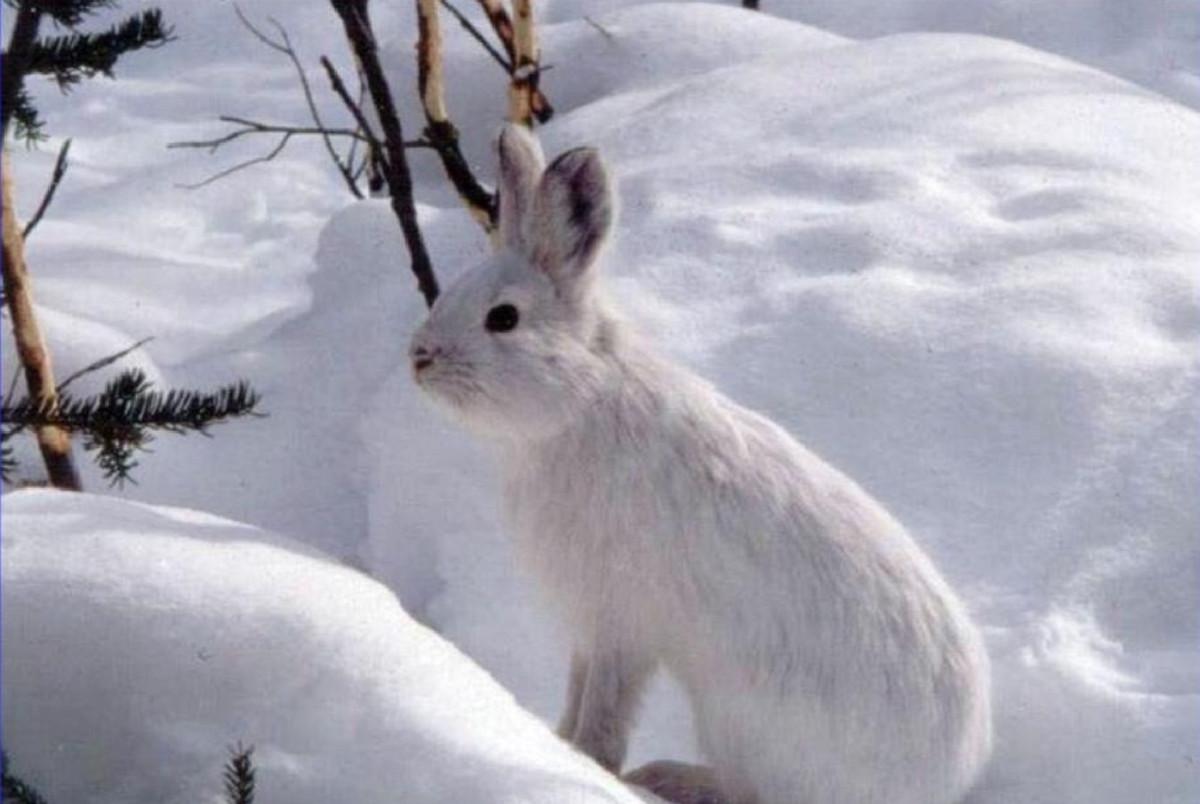 Картинки для детей заяц зимой в лесу