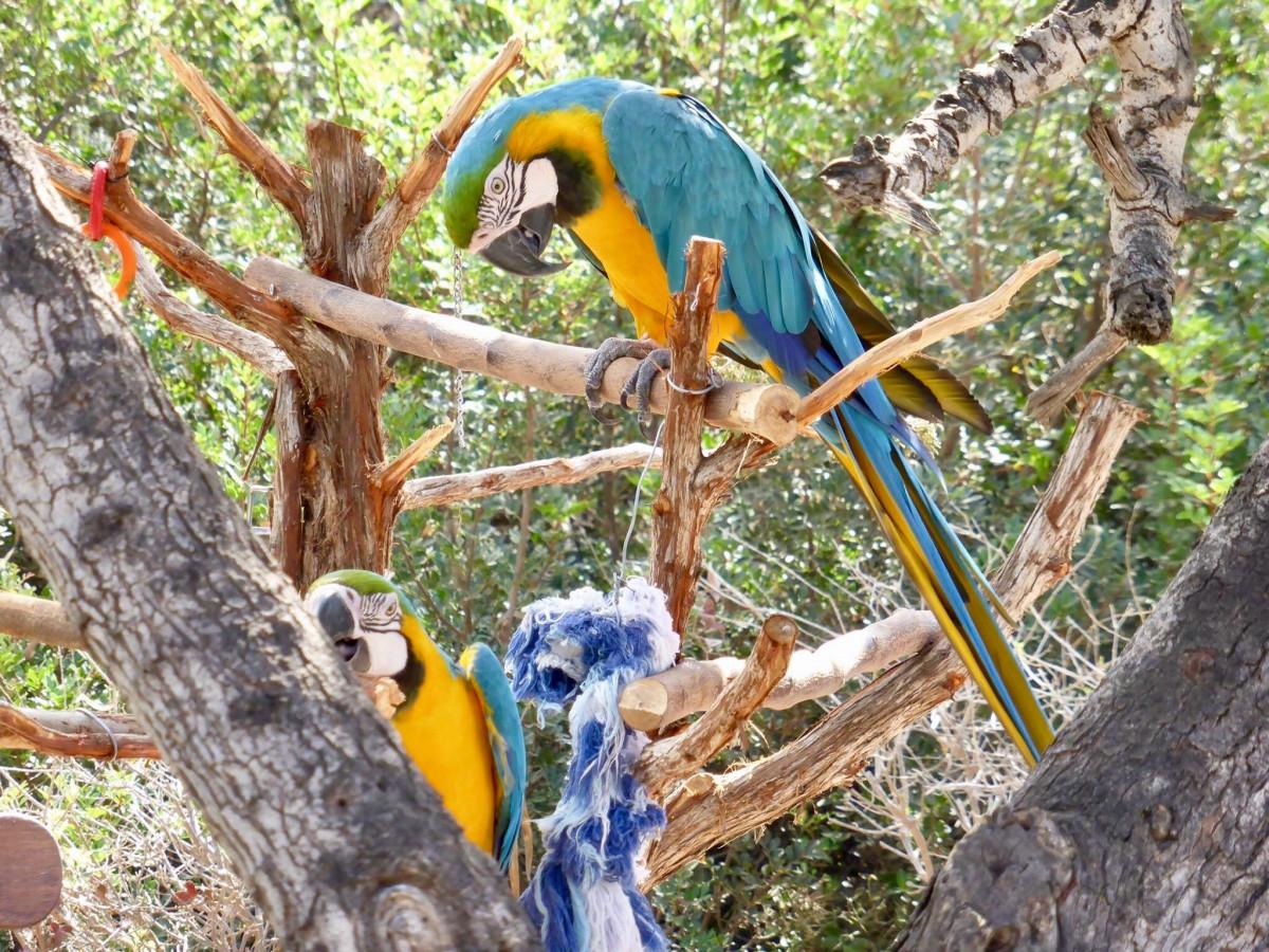 Картинки попугаи на деревьях