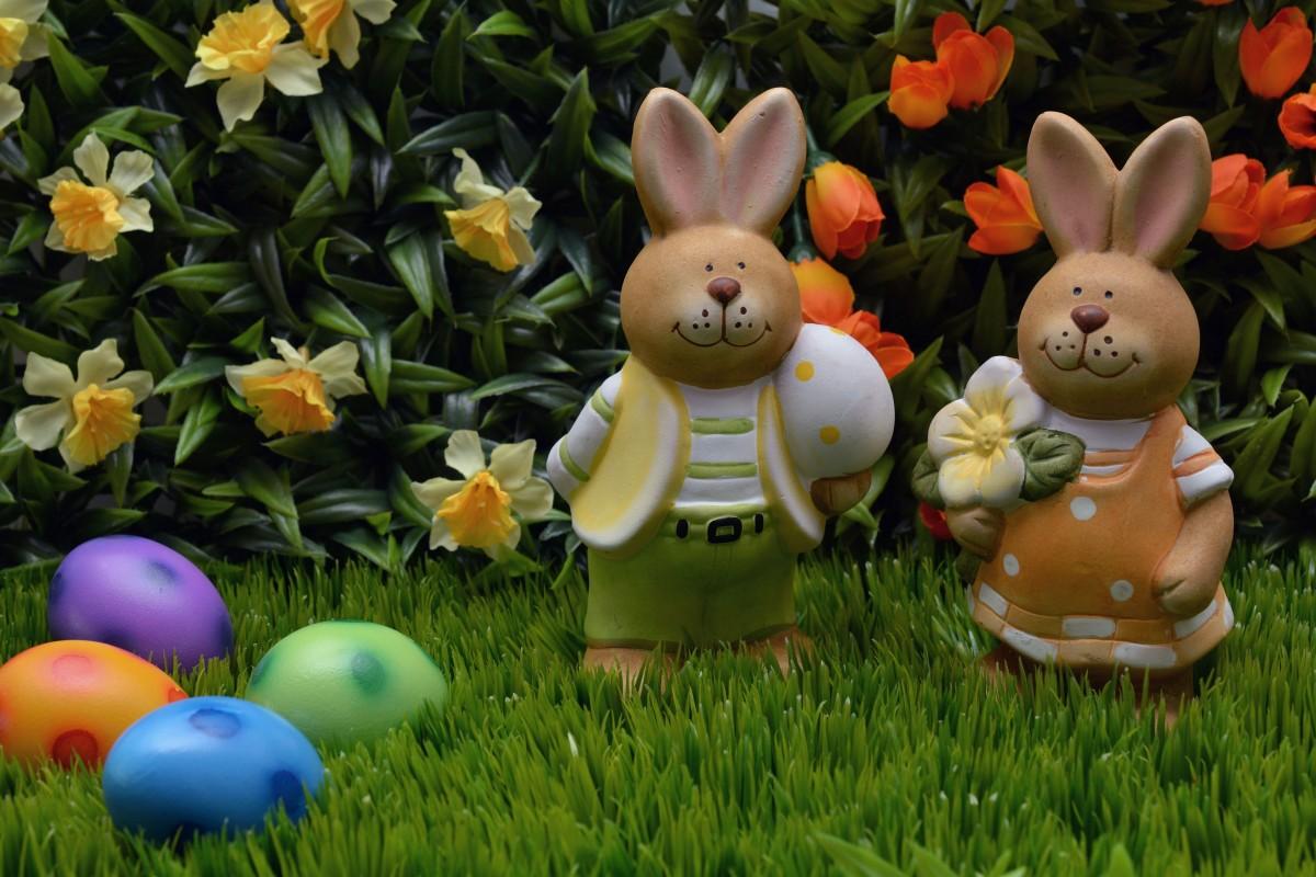 γρασίδι γκαζόν λουλούδι διακόσμηση πορτοκάλι τροφή άνοιξη πράσινος αργία μπλε κουνέλι αυγό λουλούδια λαγός έχων στίγματα βιολέτα Πάσχα λαγουδάκι του Πάσχα Πασχαλινά αυγά διακόσμηση Πάσχα ΠΑΣΧΑΛΙΝΟ ΑΥΓΟ καλό Πάσχα χαιρετισμούς Πάσχα