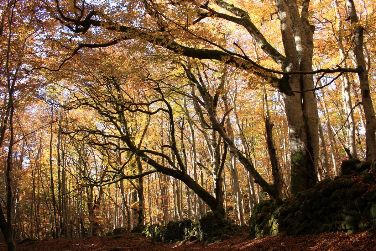 Spruce Grove Nature Park