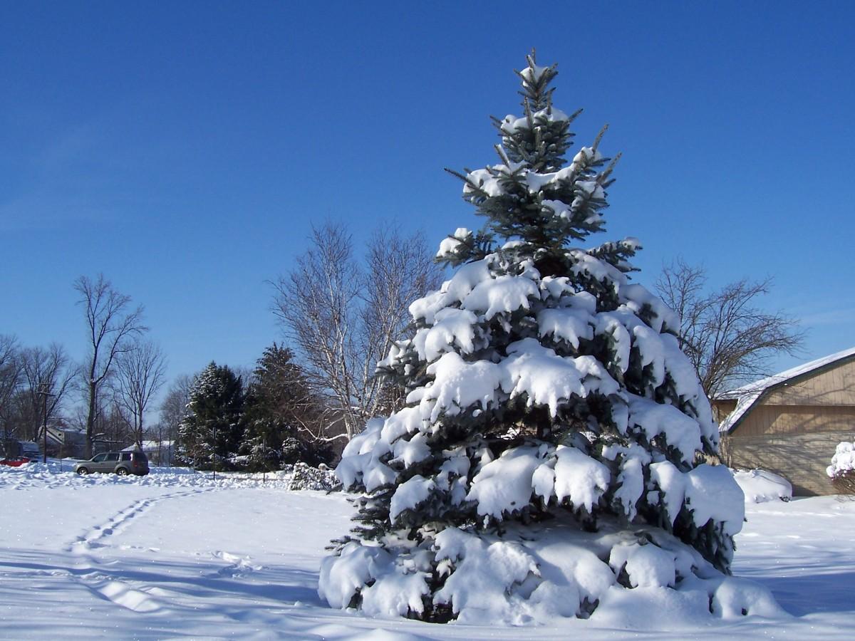 подборке фото зимнего леса под новый год подписанные фотки