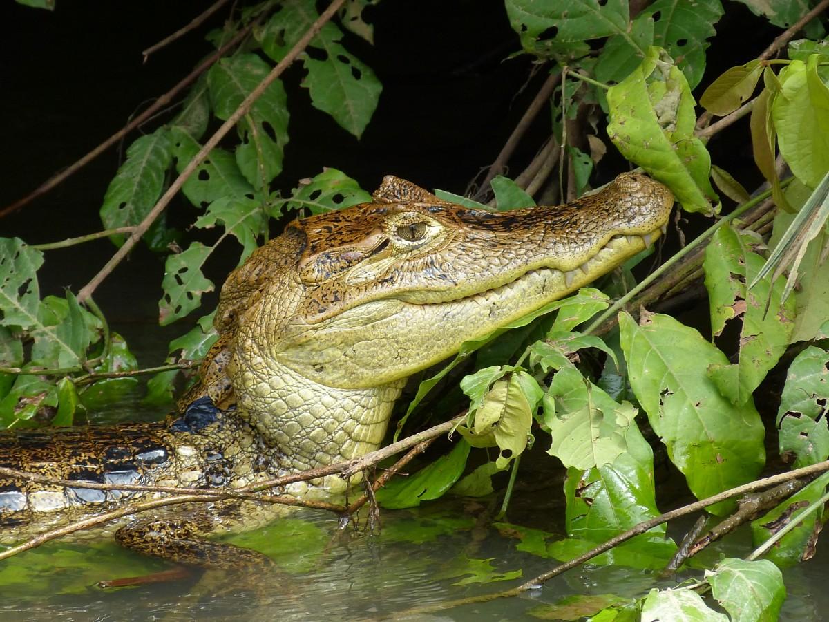 картинки крокодилов и змей создавали легкое колыхание