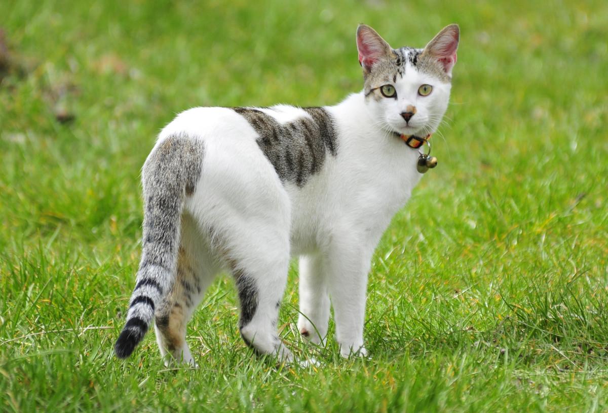 Gambar Rumput Membelai Anak Kucing Licik Binatang