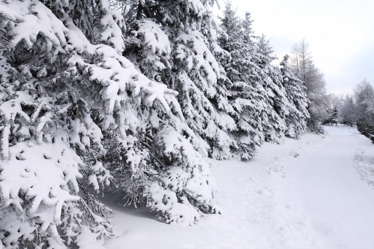 images gratuites arbre montagne neige hiver gel cha ne de montagnes m t o sapin saison. Black Bedroom Furniture Sets. Home Design Ideas