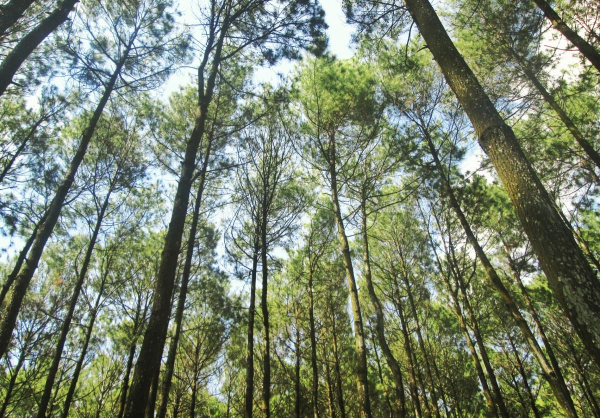 Gambar Alam Outdoor Gurun Cabang Menanam Sinar