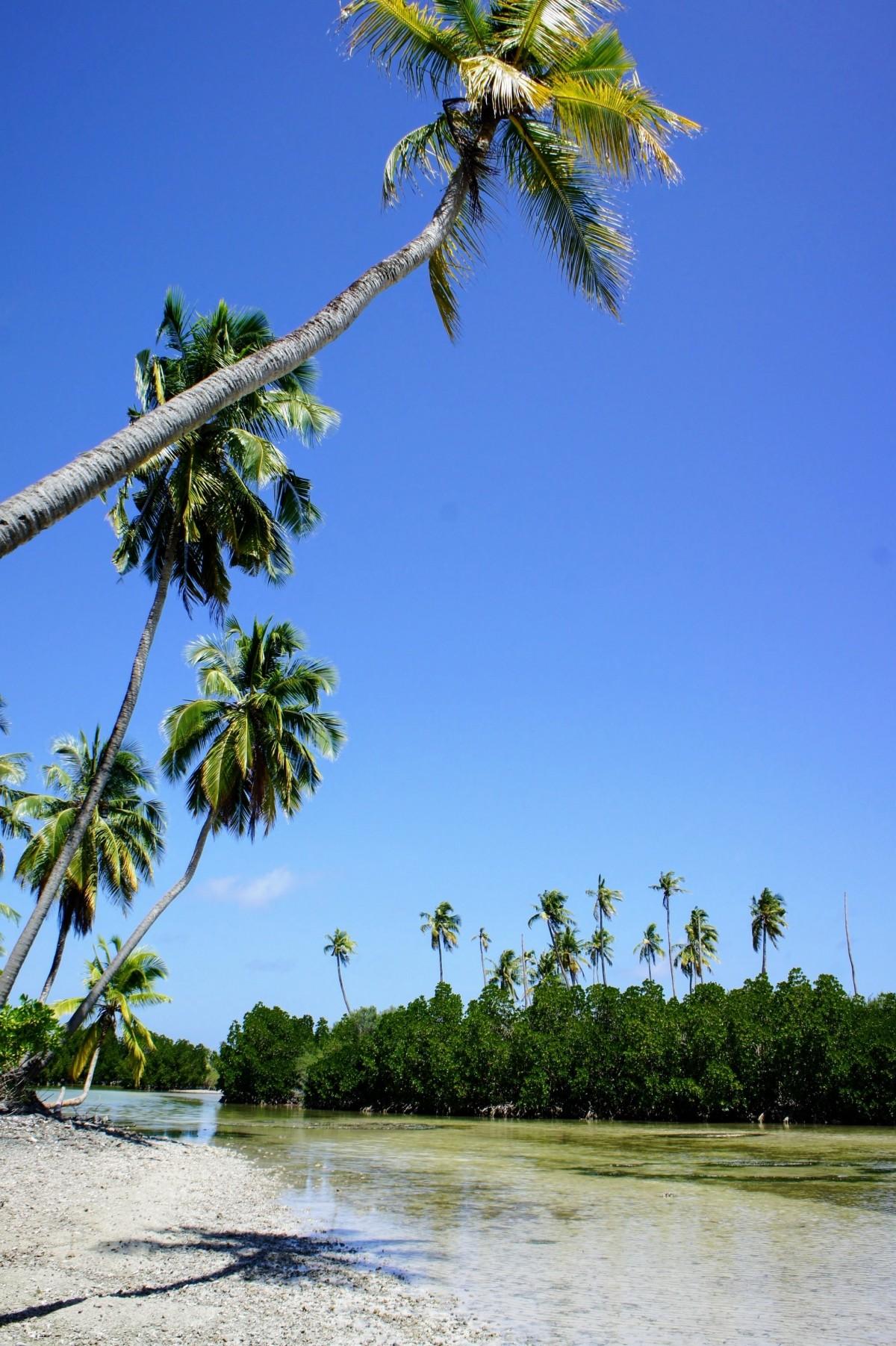 images gratuites plage mer c te arbre la nature plante palmier rive fleur rivi re. Black Bedroom Furniture Sets. Home Design Ideas