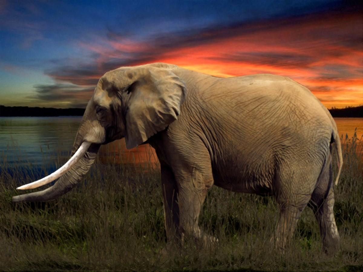 Images gratuites faune troupeau mammif re savane l phant arrangement prairie safari - Photos d elephants gratuites ...