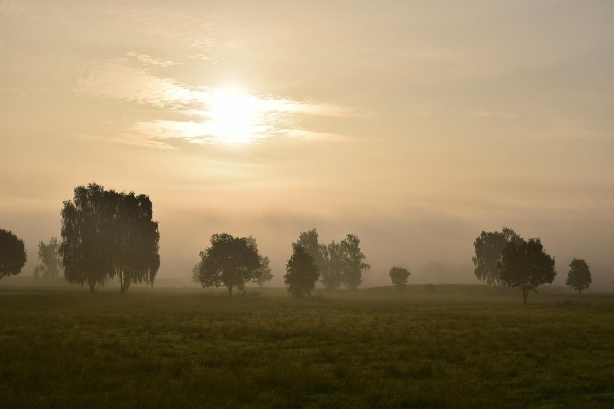 sun fog sunrise trees - photo #20