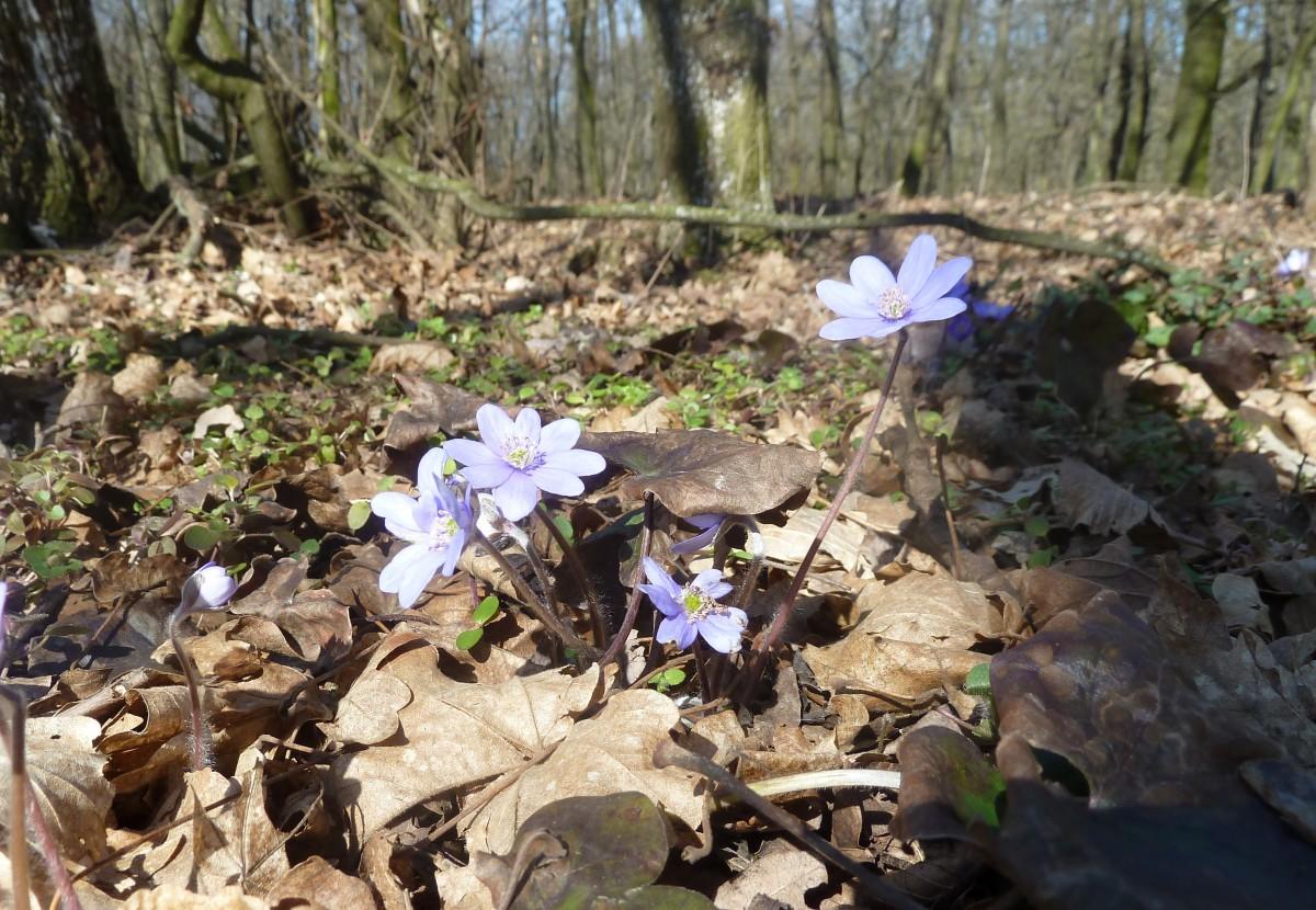 свой лесные цветы украины фото и названия ингредиенты нужно