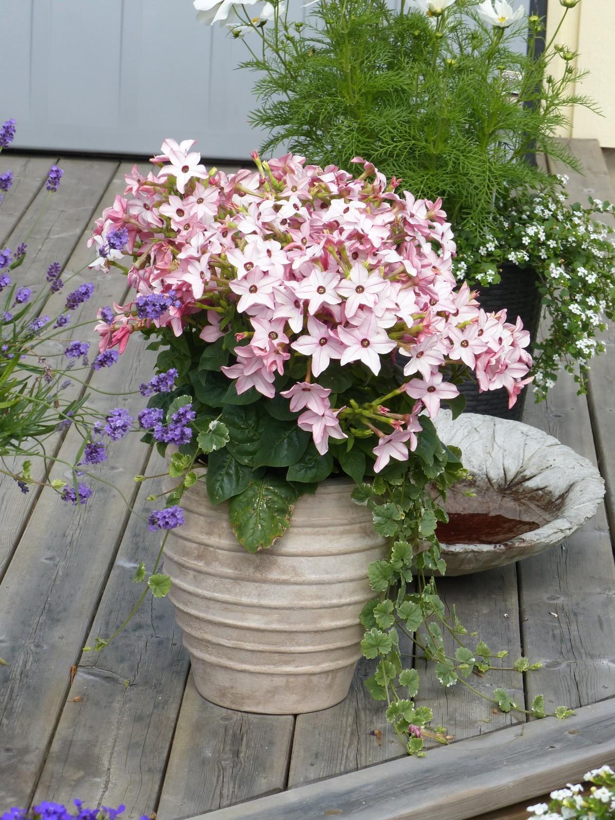 Images Gratuites Printemps Jardin Plantation Pot De Fleur Fleuriste Plante Fleurs