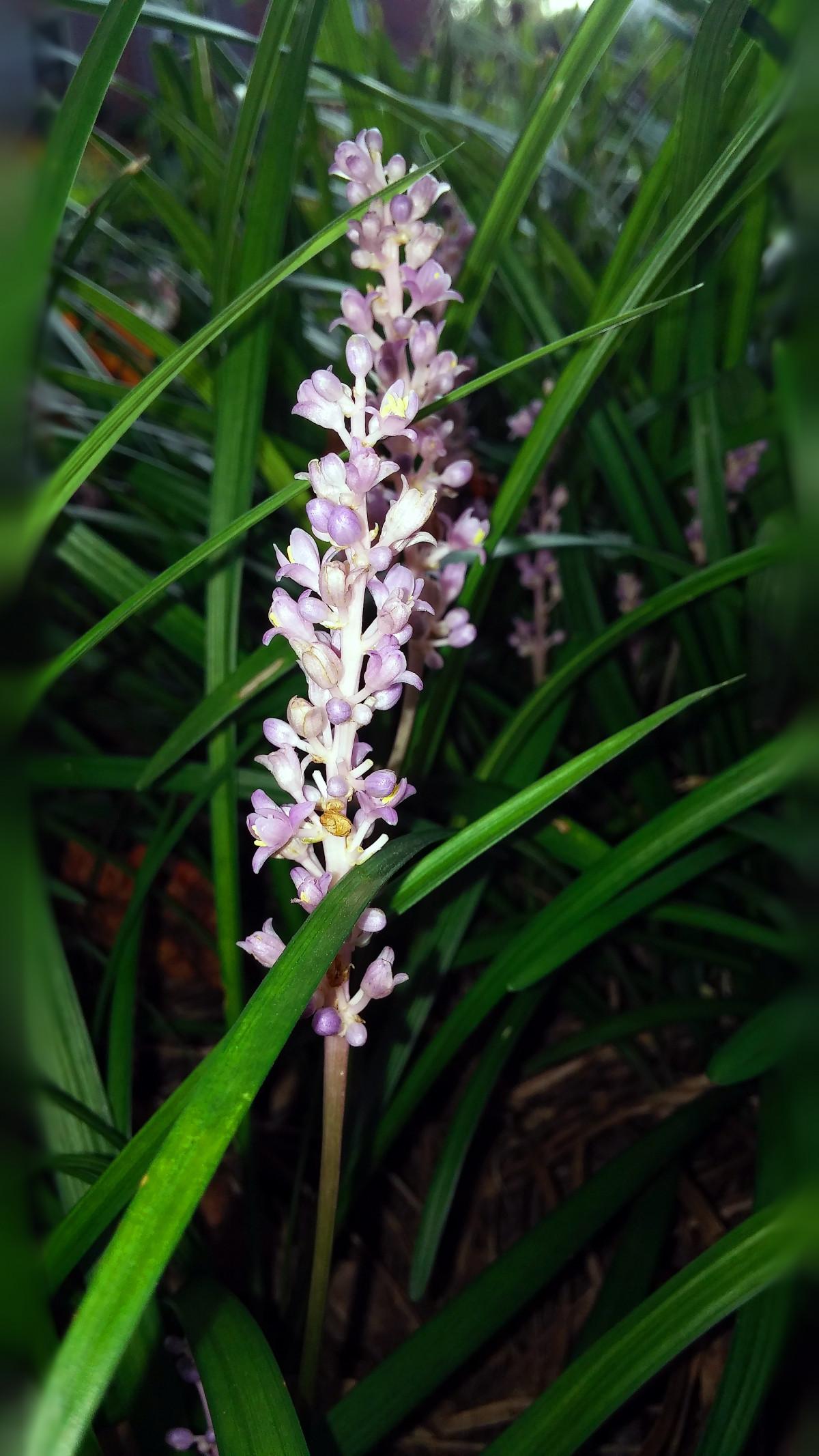 Free images rain wet foliage botany garden flora for Grass like flowering plants